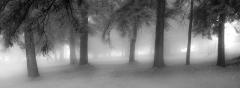 fog-3117975_1920